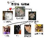 悪猫組 組織図